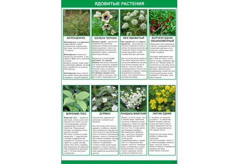 2002 Плакат Ядовитые растения